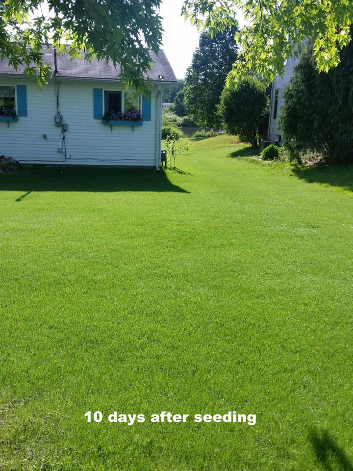 Hydroseeding Is A Great Way To Seed A Residential Lawn Producing