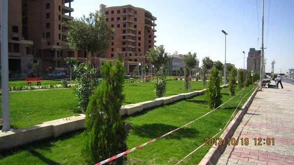 Hydroseeding job in Iraq a few weeks after seeding